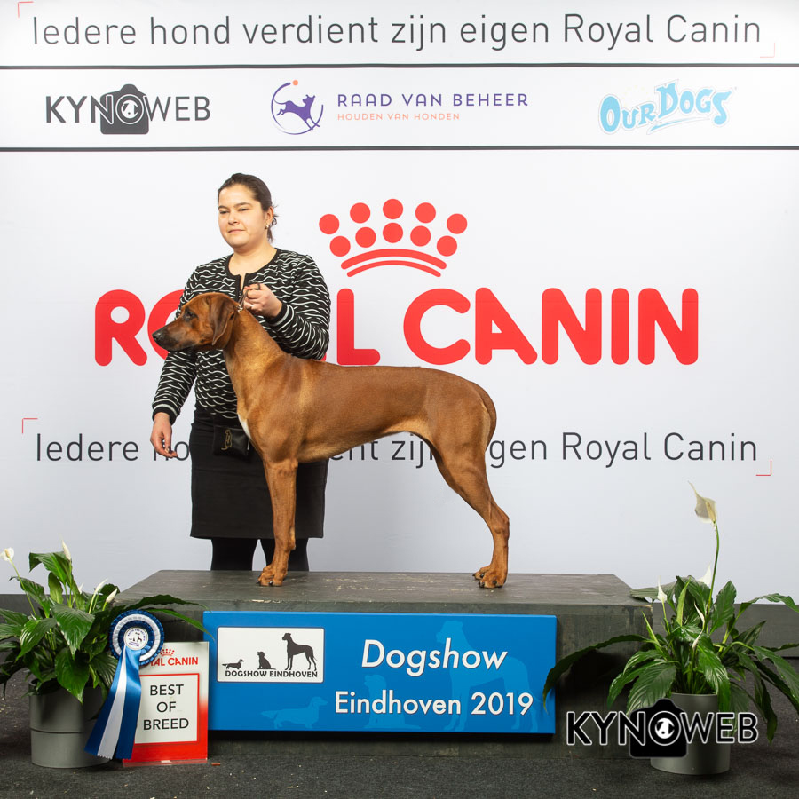 BEST_OF_BREED_955_LR_DOGSHOW_EINDHOVEN_2019_KYNOWEB_KY3_7111_20190202_13_25_29 (002)